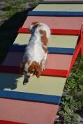 Banksia Park Puppies Ravi - 39 of 39