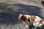 Banksia Park Puppies Ravi Lance - 28 of 47
