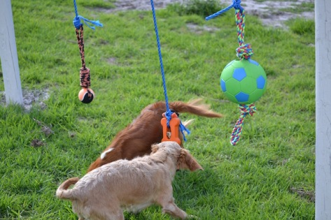 Banksia Park Puppies Rivi - 3 of 8