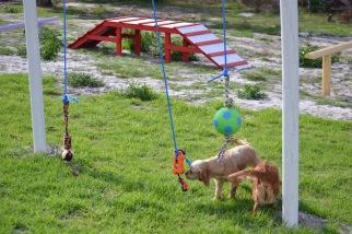 Banksia Park Puppies Rivi - 5 of 8