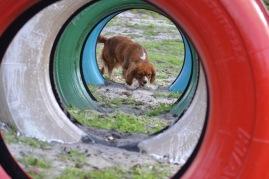 Banksia Park Puppies Rivi - 6 of 8