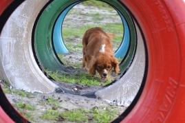 Banksia Park Puppies Rivi - 8 of 8