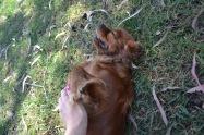 Banksia Park Puppies Rovi - 10
