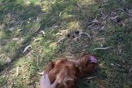 Banksia Park Puppies Rovi - 12 of 36