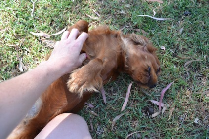 Banksia Park Puppies Rovi - 23 of 36