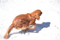 Banksia Park Puppies Rovi - 3 of 36