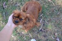 Banksia Park Puppies Rovi - 36 of 36