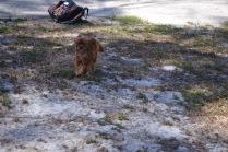 Banksia Park Puppies Rovi - 4 of 36