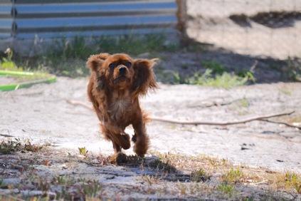 Banksia Park Puppies Rovi - 7 of 36