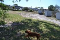 Banksia Park Puppies Rovi - 8 of 36