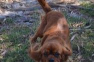 Banksia Park Puppies Rovi - 9 of 36