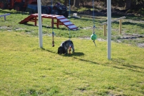 Banksia Park Puppies Shorty - 19 of 36