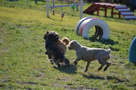 Banksia Park Puppies Shorty - 2 of 36