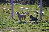 Banksia Park Puppies Shorty - 24 of 36
