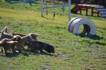 Banksia Park Puppies Shorty - 5 of 36
