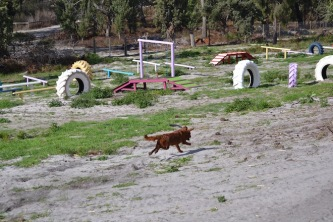 Banksia Park Puppies Agility