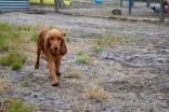 safa-banksia-park-puppies-11-of-20