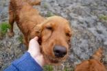 safa-banksia-park-puppies-13-of-20