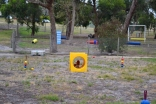 safa-banksia-park-puppies-18-of-20