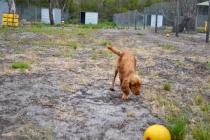 safa-banksia-park-puppies-4-of-20