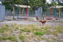 safa-banksia-park-puppies-6-of-20