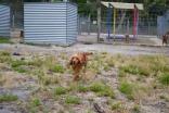 safa-banksia-park-puppies-7-of-20