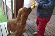 Banksia Park Puppies Pavi5