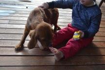 Banksia Park Puppies Pavi7