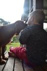 Banksia Park Puppies Pavi8
