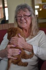 Banksia Park Puppies Ashleigh house