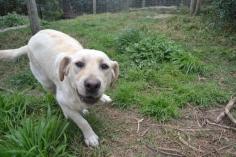 banksia-park-puppies-bluberri-1-of-14