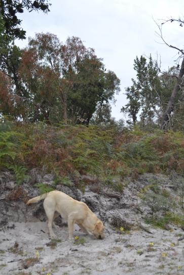 banksia-park-puppies-bluberri-11-of-14