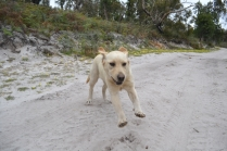 banksia-park-puppies-bluberri-14-of-14