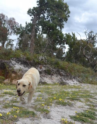 banksia-park-puppies-bluberri-2-of-14