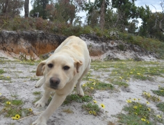 banksia-park-puppies-bluberri-3-of-14