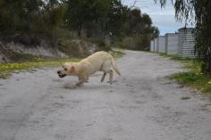 banksia-park-puppies-bluberri-4-of-14
