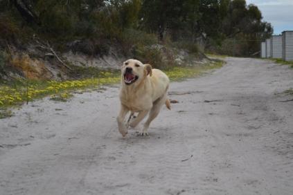 banksia-park-puppies-bluberri-5-of-14