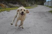 banksia-park-puppies-bluberri-6-of-14
