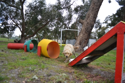 banksia-park-puppies-happy-1-18-of-57