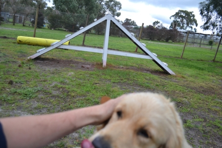 banksia-park-puppies-happy-1-27-of-57