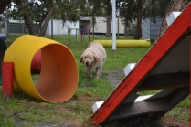 banksia-park-puppies-happy-1-52-of-57