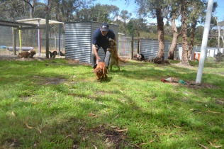 banksia-park-puppies-honey-27-of-33
