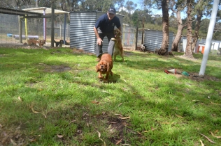 banksia-park-puppies-honey-28-of-33