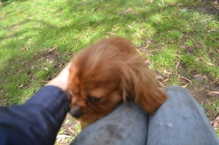 banksia-park-puppies-honey-32-of-33