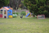 Banksia Park Puppies Lotto - 4 of 22