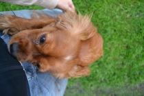 Banksia Park Puppies Salli - 10 of 22