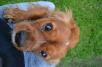 Banksia Park Puppies Salli - 11 of 22