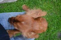 Banksia Park Puppies Salli - 12 of 22
