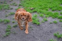 Banksia Park Puppies Salli - 16 of 22