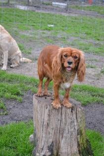 Banksia Park Puppies Salli - 20 of 22